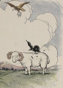 The jackdaw trying to lift the ram